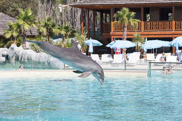 http marineland rencontre avec les animaux dauphins