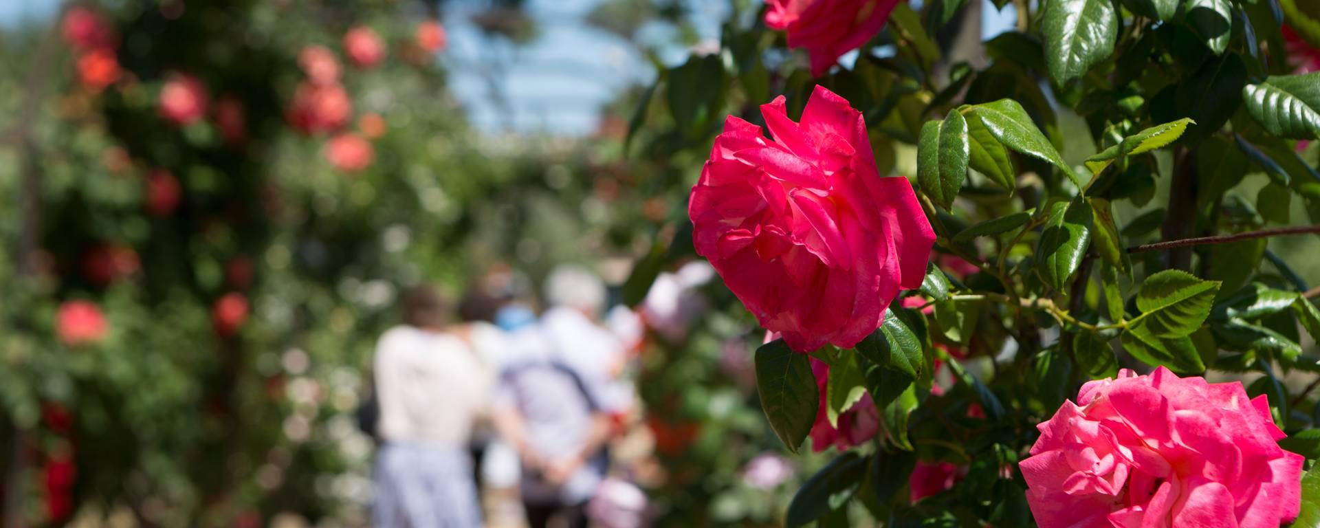 Rose garden of Eilenroc villa ©Mairie d'Antibes - J. Bayle