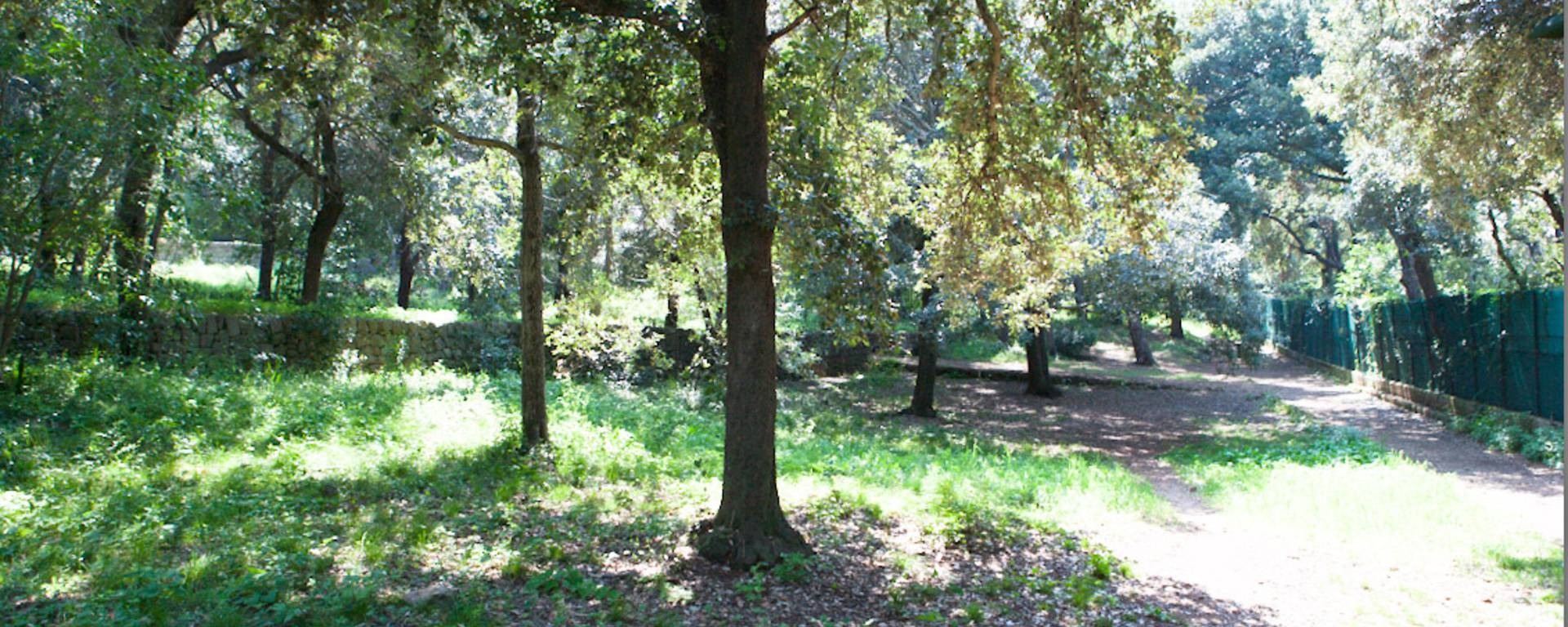 Le Bois de la Garoupe ©Mairie d'Antibes - J. Brosset