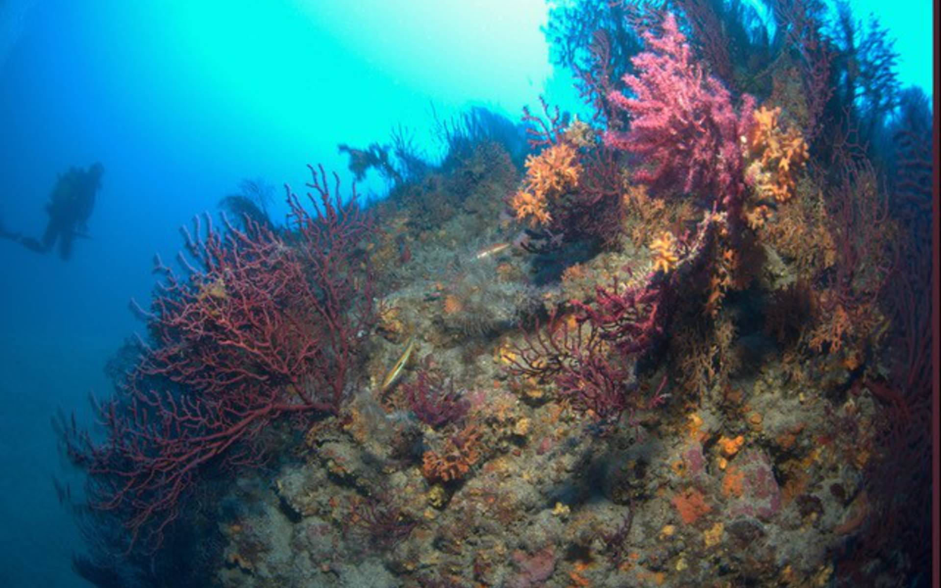Essayez La Plongée Sous Marine Avec Subvision It Site
