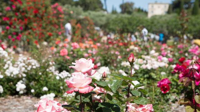 Rose garden of Eilenroc villa ©Mairie d'Antibes J. Bayle