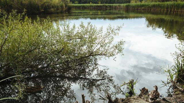 L'étang de Vaugrenier ©Gilles Lefrancq