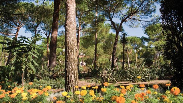 Juan-les-Pins pine grove ©F. Trotobas