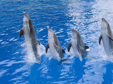 Dolphins © Marineland