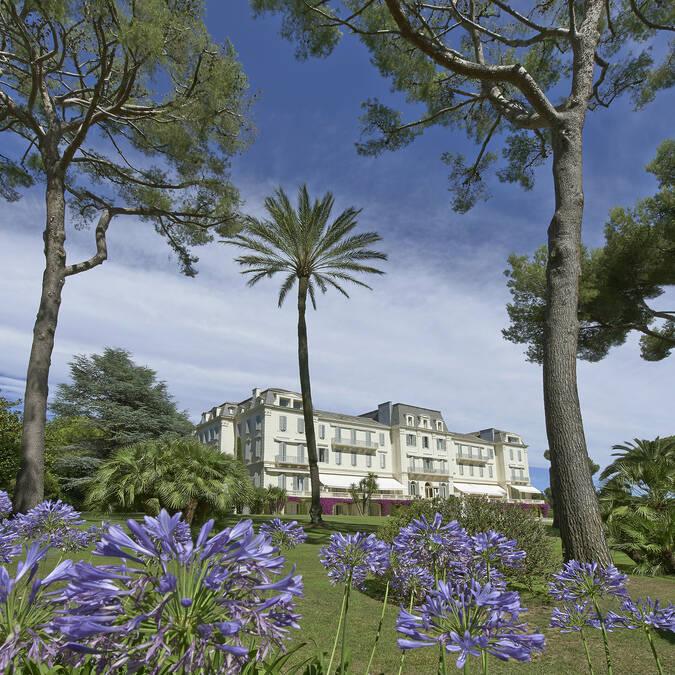Hotel Cap Eden Roc - agapanthe en fleur