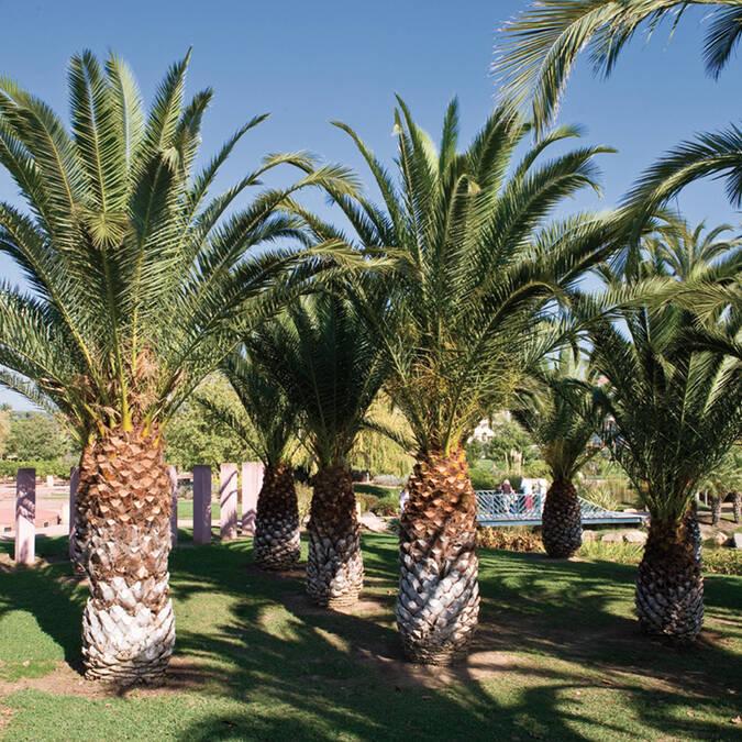 Exflora park, the palm grove ©F. Trotobas